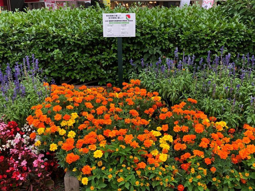 宅地建物取引業協会で管理している大橋駅前の花壇