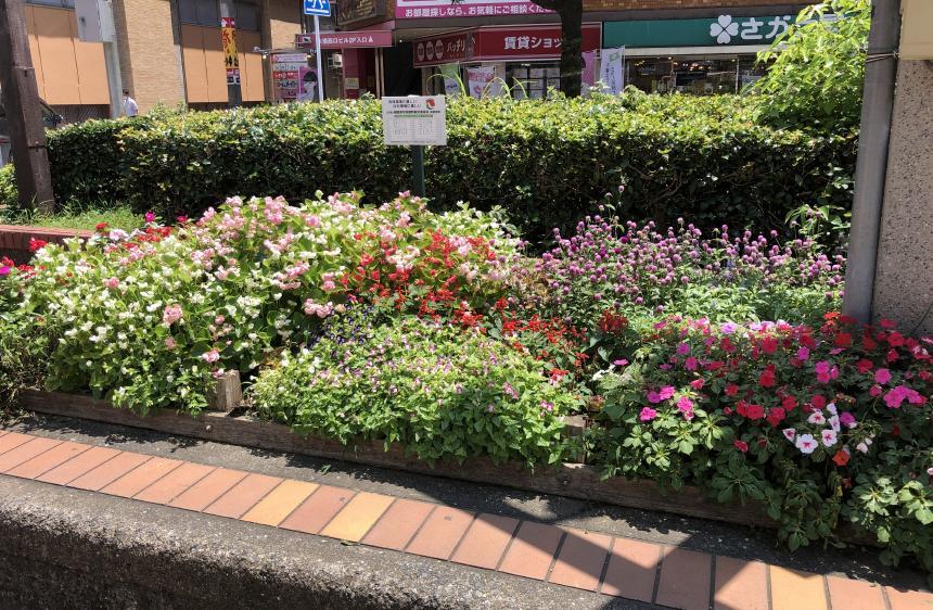 宅地建物取引業協会で管理している大橋駅前の花壇2020